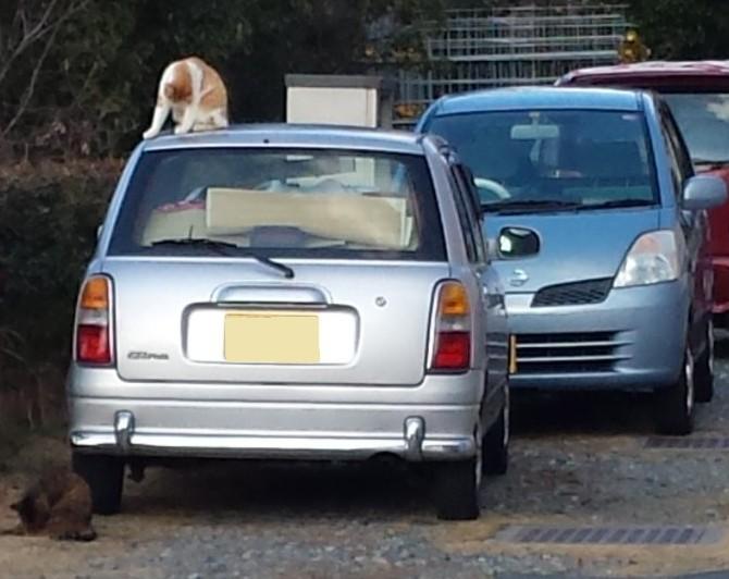 冬の風物詩 猫バンバン!